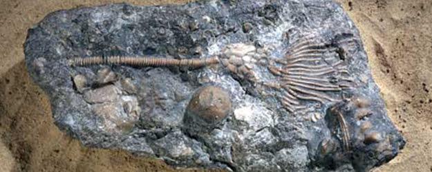 Limestone - Sea Floor Limestone - Fossil Limestone Floor - KleanSTONE